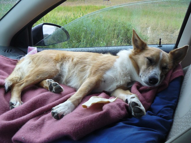 Lupe in the G6 near Mt. Zirkel 8-16-15