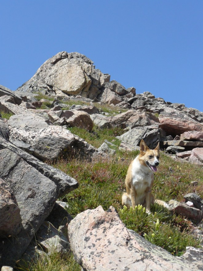 Getting there! Lupe on her way up the left prong of Mt. Zirkel.