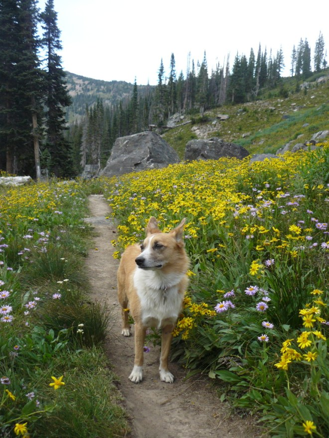 Lupe on the Gilpin Trail.
