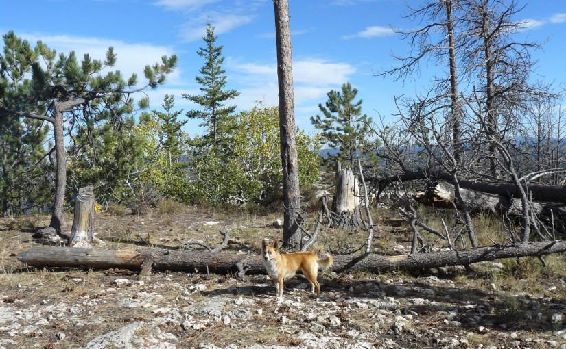 Black Hills, SD Expedition No. 138 – White Tail Peak (9-19-15)