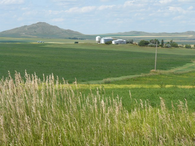 The farm S of Beach, ND. Wow, after crossing central and eastern Montana, that hill in the distance is a veritable mountain! Crops are looking good, too. Wheat and lentils.