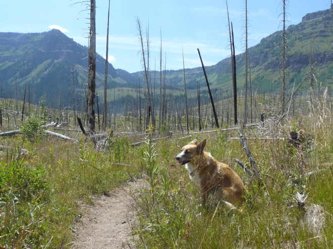 Lupe on the Ghost Trees Trail (Wall Lake Trail officially). Photo looks SSW towards a canyon Lupe was on her way to.