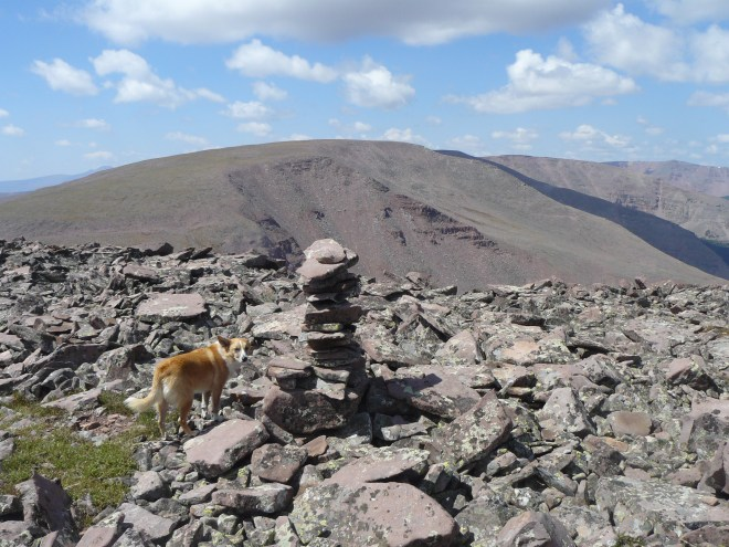 Lupe reaches the summit cairn on Walk Up Peak. The cairn is a little way NW of the actual summit, which Lupe had already visited. Photo looks WSW toward Taylor Peak, the next big hill along the ridge.