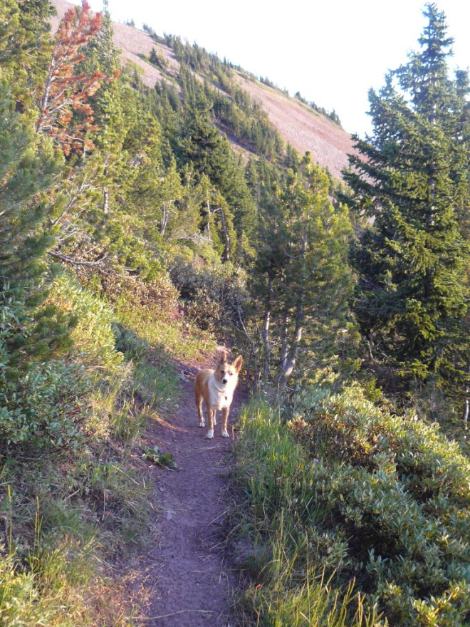 Lupe going down the trail SW of Wyoming Peak.
