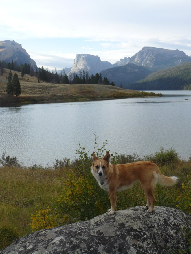 Lupe near Lower Green River Lake. Squaretop Mountain is in the distance.