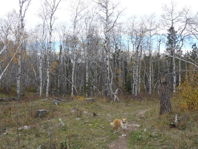 Lupe on Old Baldy Trail No. 66 E route, 10-11-15
