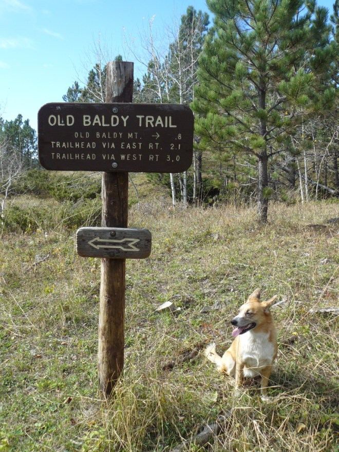 Lupe at trail junction near Old Baldy Mountain, 10-11-15