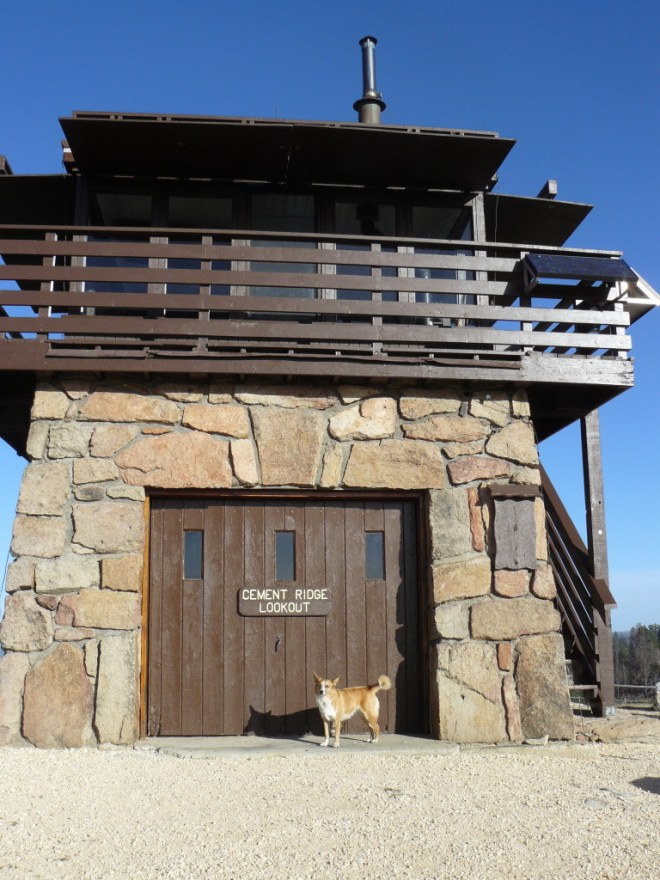 Lupe at Cement Ridge Lookout Tower, 10-11-15