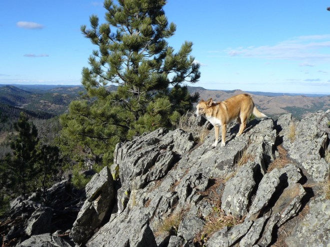 Lupe up on the North rock cluster. These are the very highest rocks on the True Summit of Five Points. Photo looks N.
