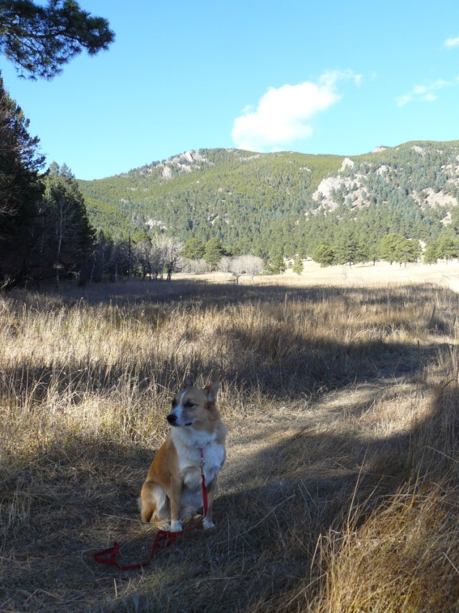 Lupe on the old road in Elk Meadow Park. Bergen Peak in the background. Photo looks W.