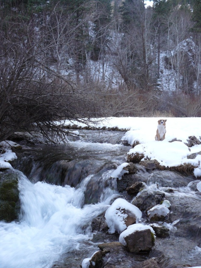 Lupe along Little Spearfish Creek close to Roughlock Falls, 11-22-15