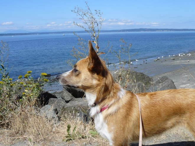Lupe saw the ocean for the first time ever at Golden Gardens Park in Seattle, where she had a great view of Puget Sound.