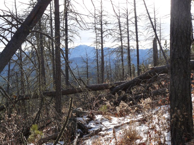 View from the upper NE slopes of Smith Mountain looking SE towards Harney Peak. There is less deadfall timber here than lower down.