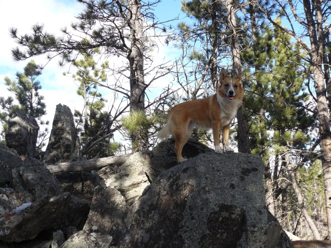 Lupe up on the false summit of Smith Mountain.
