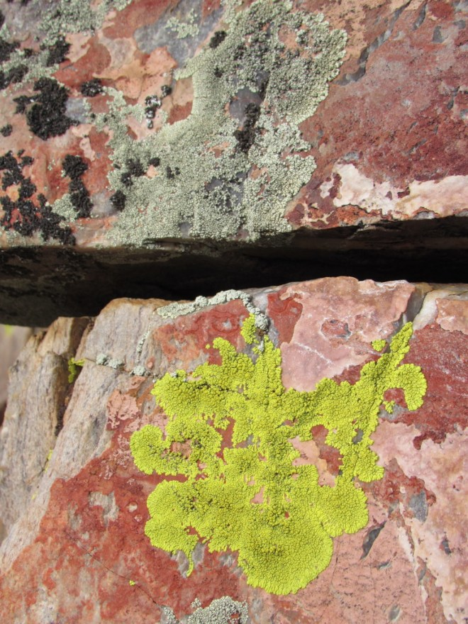 Colorful rocks were decorated with even more colorful lichens.