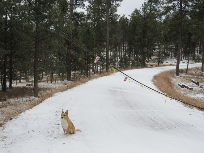 Ever get the feeling something wasn't meant to be? Lupe by the droopy power line. The Dakota Point trailhead of Centennial Trail No. 89 is just another 100 yards ahead.