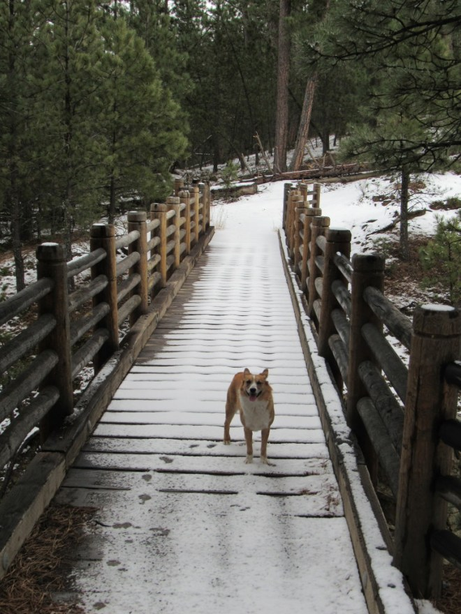 Lupe reaches the bridge over the Sheridan Lake spillway. Good thing THIS bridge was still intact!