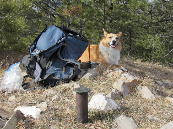 Lupe wakes up after a Dingo nap on Whitewood Peak. Photo looks N.