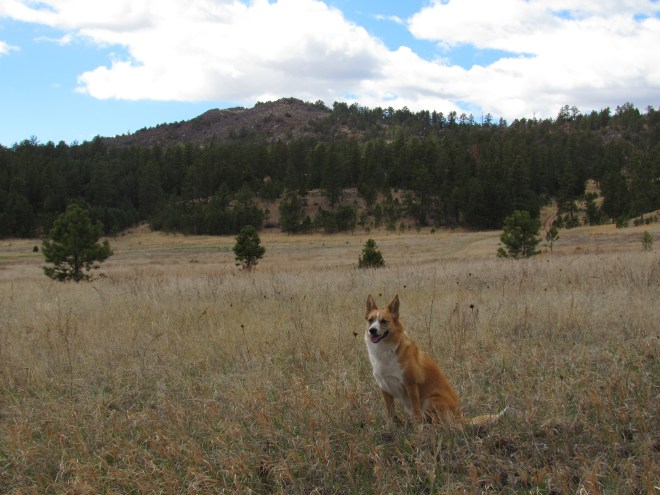 Red Butte from near USFS Road No. 281.1V. Photo looks WNW.