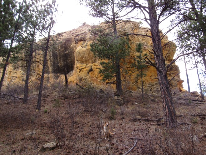 The N end of the E face of Yellow Butte gave Lupe no encouragement at all. She could only get up this part of the mountain with Dingo Wings, which she didn't happen to have on her at the time. Photo looks WSW.
