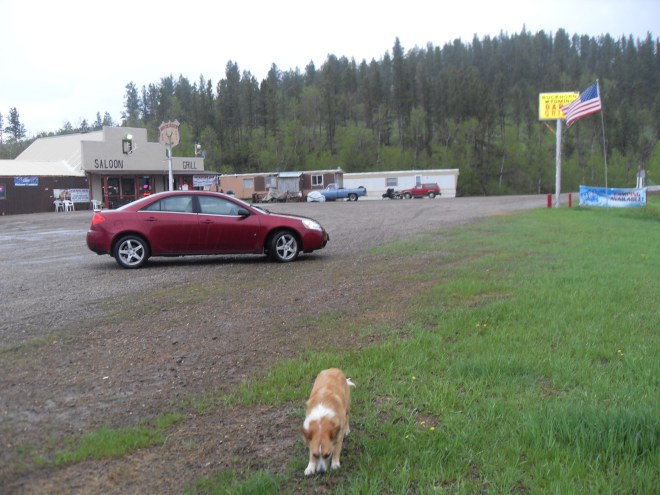 Lupe sniffs around outside the Buckhorn, WY Bar & Grill.