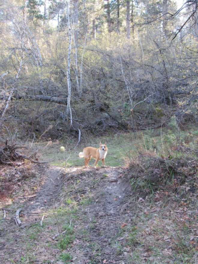 Lupe up on the hump of dirt near the start of the side road off USFS Road No. 195.2A. Photo looks SSW.