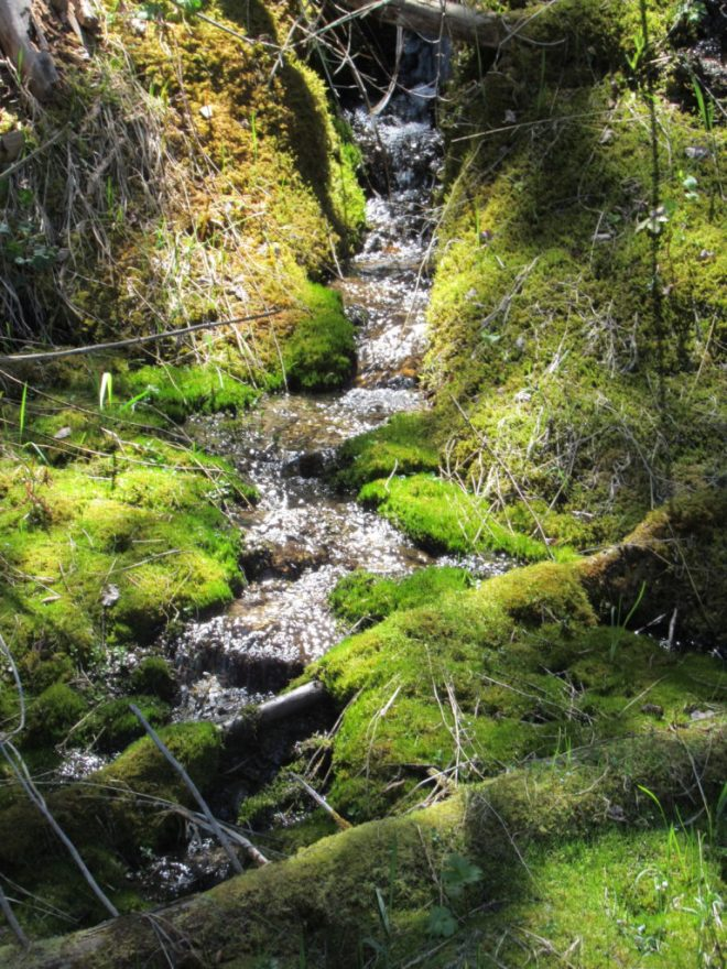 The mossy-banked rivulet next to Annie Creek Road. Lupe wasn't thirsty yet.