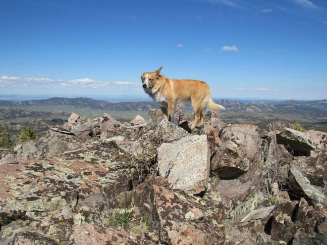 Lupe atop Warbonnet Peak (9,414 ft.) the Converse County, WY High Point. Photo looks ESE.