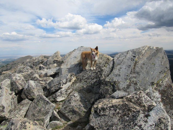 Lupe reaches the highest boulder on Hazelton Pyramid! Photo looks SE.