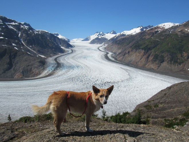 Lupe at the main Salmon Glacier viewpoint near the highest point on the access road. Photo looks W.