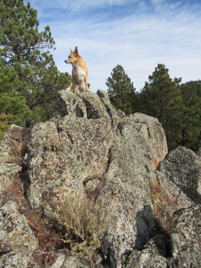 Lupe surveys the world from the top of Ragged Top! Photo looks N.