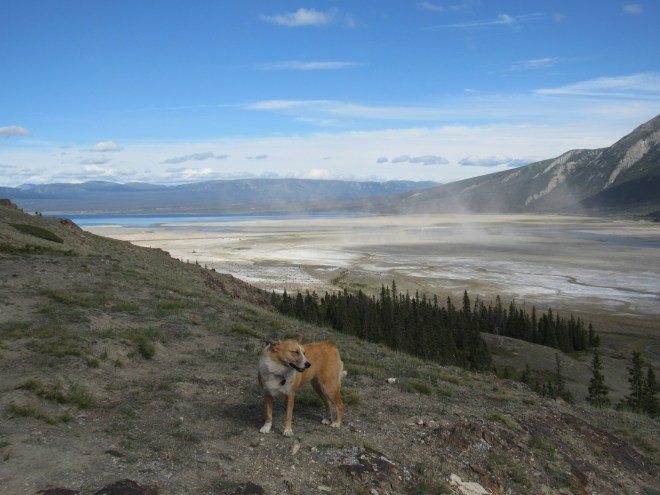 Dust blows down the Slims River valley toward Kluane Lake. Photo looks E.