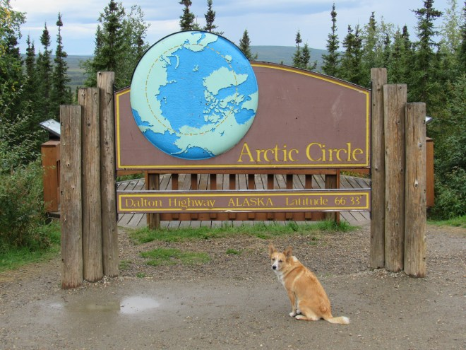 Intrepid American Dingo Lupe at the Arctic Circle!