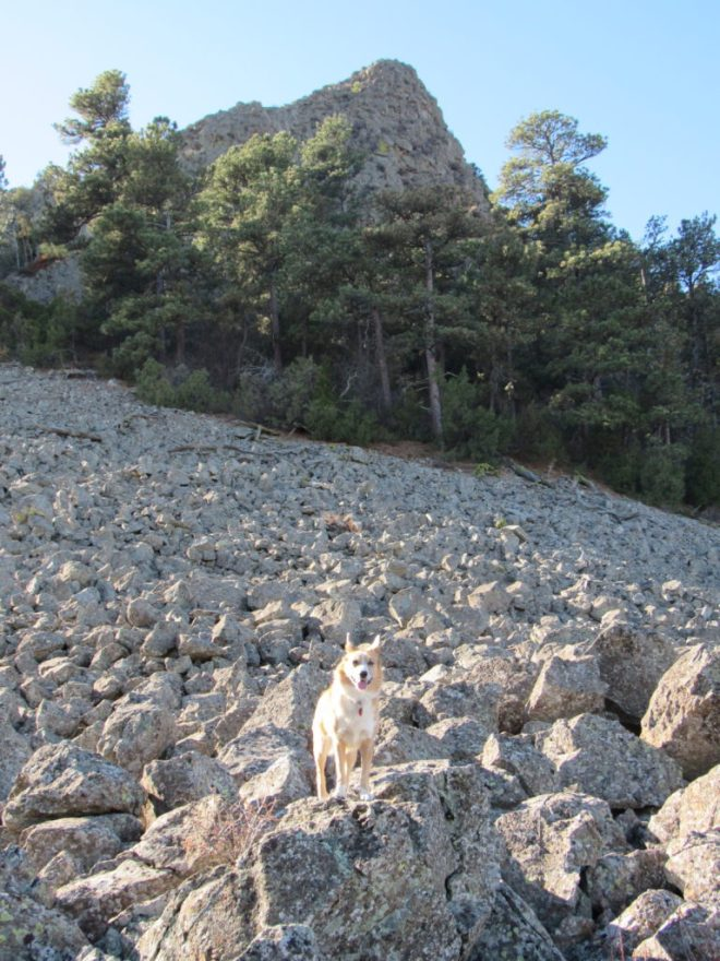 Lupe starts up the highest NW Missouri Butte. She went up the boulder field and then climbed through the trees to the base of the cliff. She then worked along the base of the cliff to the W (R). Photo looks SSW.