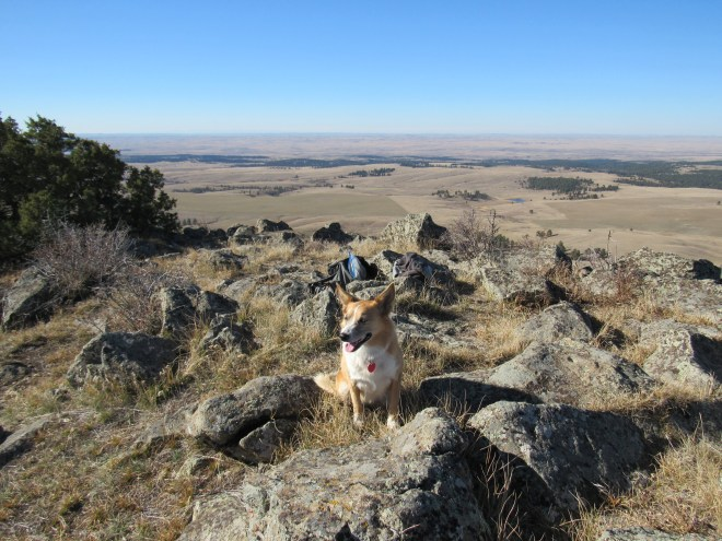 Lupe near the true summit. Photo looks W. The Bighorn Mountains could be seen on the horizon, but don't show up in the photo. Lupe assures you, they are out there!