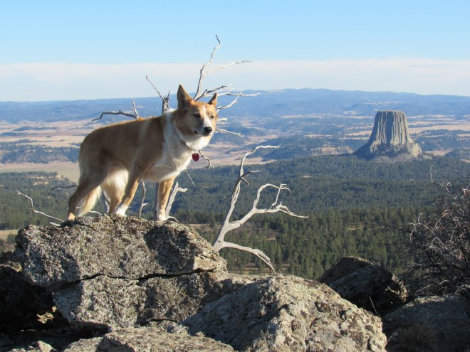 Hmmm. That Carolina Dog looks a bit familiar! So does that odd tree stump-shaped rock in the distance.