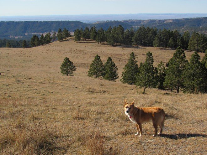 Lupe finds a much more extensive grassland than she'd been expecting. She had a great view from here. Photo looks SW.