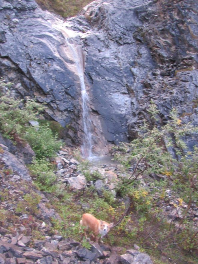 Lupe below the waterfall in the SE valley. She had already lost a tremendous amount of elevation.