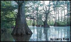 Paddling the Primordial - Swamp Paddling