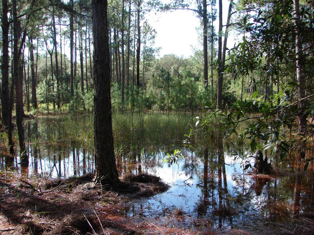 8 Swamp Paddling Getaways   Adventure Sports Network