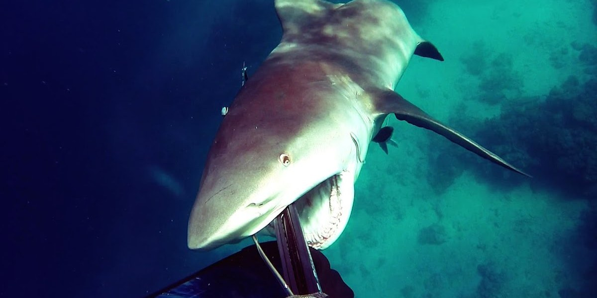 Diver reacts to attacking bull shark just in time