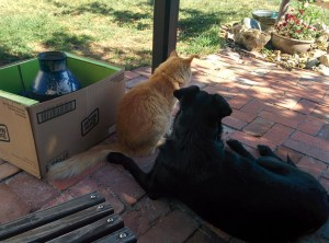 Dog & cat sitting together on a brick patio