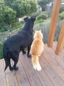 Dog & Cat sitting together on a wooden porch