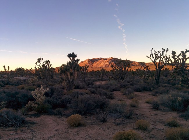 pic of hill bathed in the last light of the day shot through some joshua trees