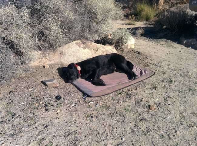 dog napping on her pad in the sun