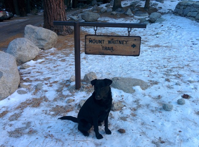 My dog looking magnificent beside the sign at the beginning of the trail up Mount Whitney