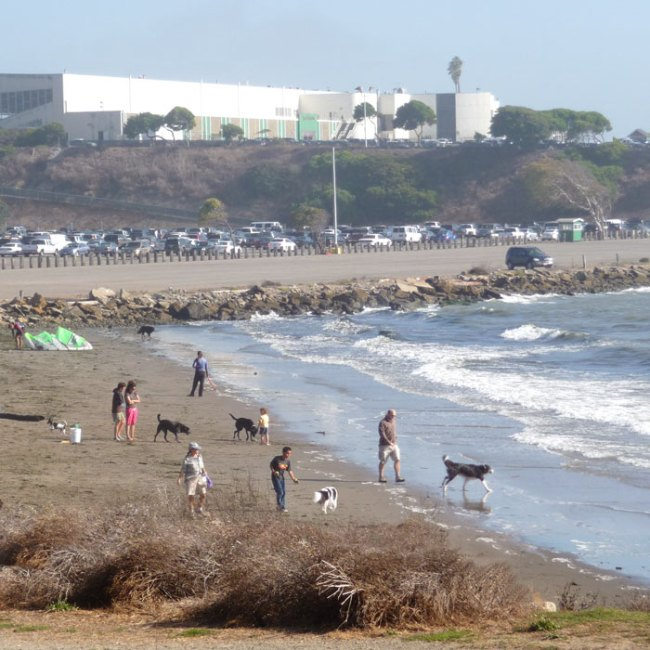 Buchanan Dog Beach with Golden Gate Fields in the background