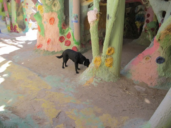 Willow sniffing at some brightly painted tree trunks