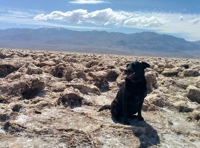 Willow Being Forced to Pose on the Hard Salt Formations