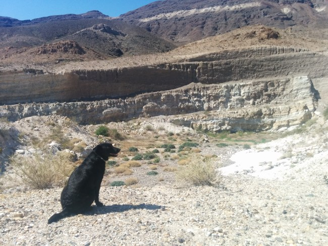 Willow At The Edge Of The Open Pit Mine